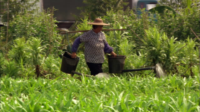 Medium shot tracking shot woman carrying buckets on yoke and watering plants in field