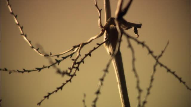 Medium shot tree branch/ Los Angeles, California