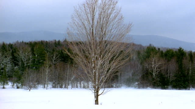 medium shot trees changing color through four seasons / vermont - le quattro stagioni video stock e b–roll