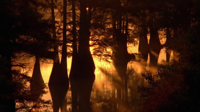 medium shot trees in swamp at sunrise or sunset / mississippi - wetland stock videos & royalty-free footage