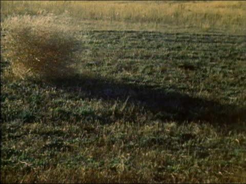 1983 medium shot tumbleweed rolling across green grass