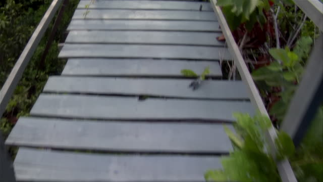 Medium shot walking point of view down rickety footbridge/ The Amazon, Brazil