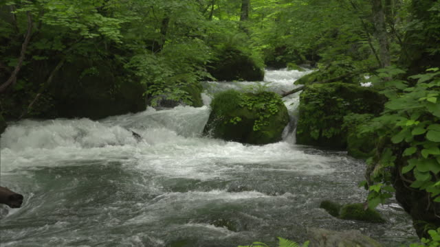 Medium shot: Water flowing amid the rugged-looking rocks of the Oirase Stream, Aomori, Japan
