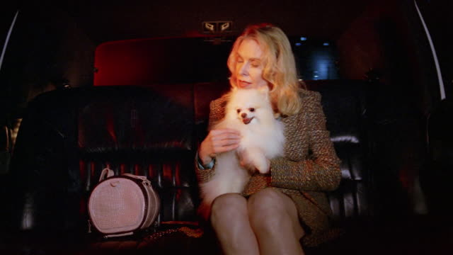 medium shot wealthy woman holding pomeranian in limo / stroking and cuddling dog - gabbietta per animali video stock e b–roll