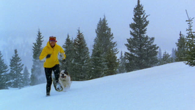 stockvideo's en b-roll-footage met medium shot woman and st. bernard dog running uphill w/snow falling w/pine trees in the background / vail, colorado - elasthaan
