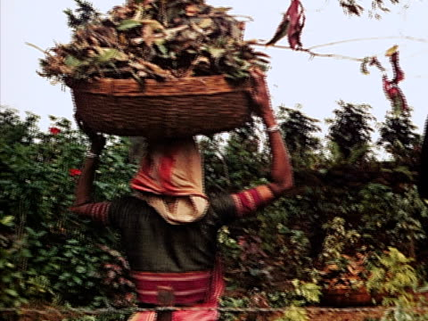 vidéos et rushes de 1939 medium shot woman carrying basket on head filled with leaves/ bombay, india  - homme dans un groupe de femmes