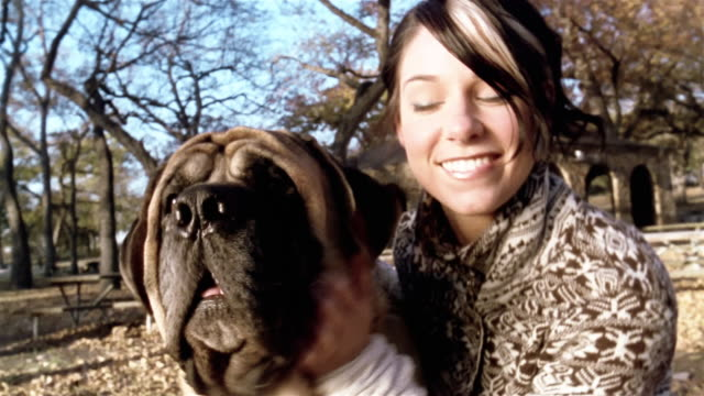 Medium shot woman petting bull mastiff / smiling at camera / dog licking woman's face