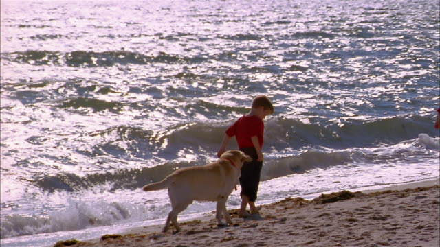 medium shot young boy and dog walking on beach - nur kinder stock-videos und b-roll-filmmaterial