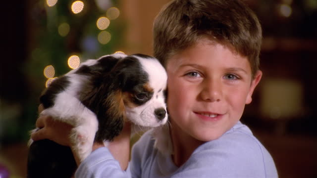 medium shot young boy kissing puppy / holding it to his face and smiling /setting it down in christmas gift box - spaniel stock videos and b-roll footage