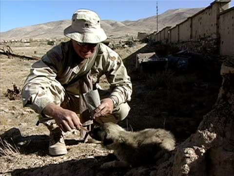 vídeos de stock, filmes e b-roll de medium shot zoom in soldier feeding puppy/ afghanistan - uniforme militar