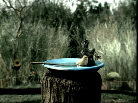stockvideo's en b-roll-footage met medium shot zoom in yellow bird in birdbath on stump / bird flying away - boomstronk