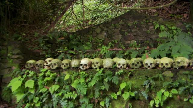 vídeos de stock, filmes e b-roll de medium shot zoom out human skulls lined up under taru menyan (menyan tree) at trunyan village / bali, indonesia - medium group of objects