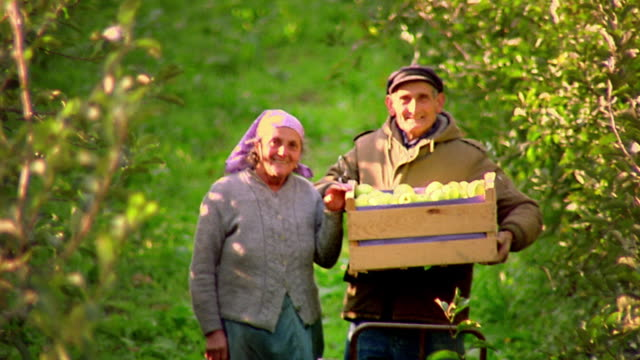 medium shot zoom out portrait senior couple posing in orchard with crates of green apples / provence, france - frankrike bildbanksvideor och videomaterial från bakom kulisserna