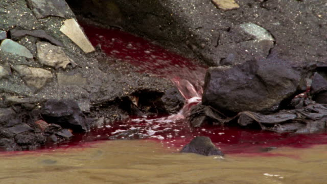 medium shot zoom out red polluted water draining into stream / bombay - 化学薬品点の映像素材/bロール