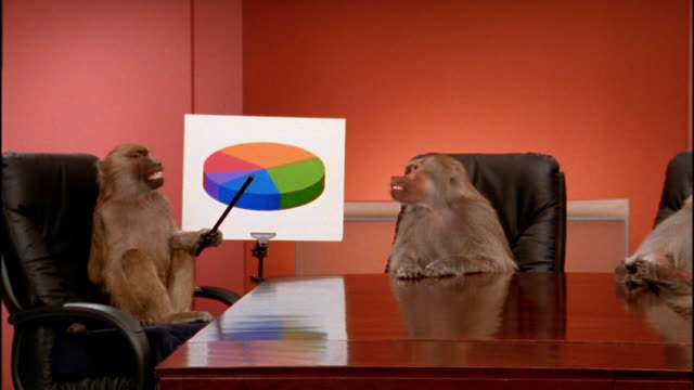 medium shot zoom out to wide shot baboon pointing to pie chart / 2 other baboons around conference table watching - baboon office stock videos & royalty-free footage