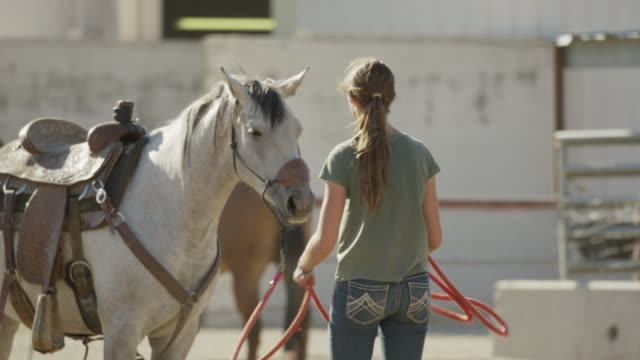 vídeos de stock, filmes e b-roll de medium slow motion panning shot of girl gathering rope and petting horse / lehi, utah, united states - lehi