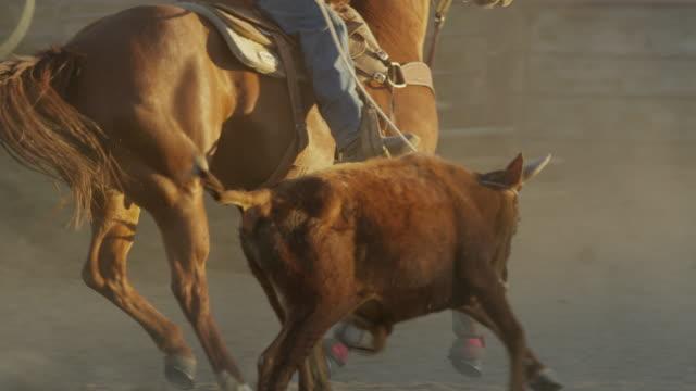 medium slow motion panning shot of man on horse roping bull / lehi, utah, united states - lehi stock-videos und b-roll-filmmaterial