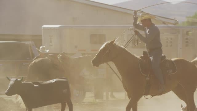medium slow motion panning shot of man riding horse throwing lasso / lehi, utah, united states - lehi stock videos & royalty-free footage