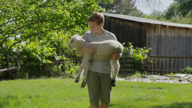 medium slow motion shot of boy carrying and petting lamb / springville, utah, united states - springville utah stock-videos und b-roll-filmmaterial