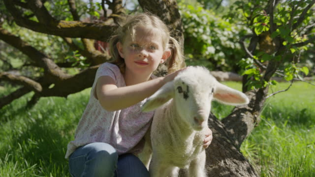 medium slow motion shot of girl petting lamb in field / springville, utah, united states - springville utah stock-videos und b-roll-filmmaterial