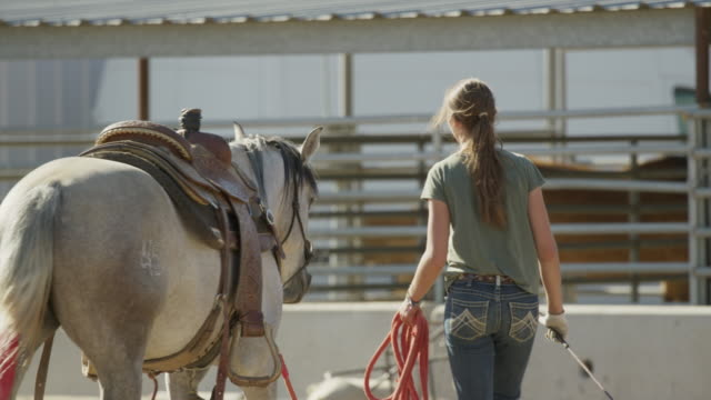 vídeos de stock, filmes e b-roll de medium slow motion shot of girl walking horse / lehi, utah, united states - lehi