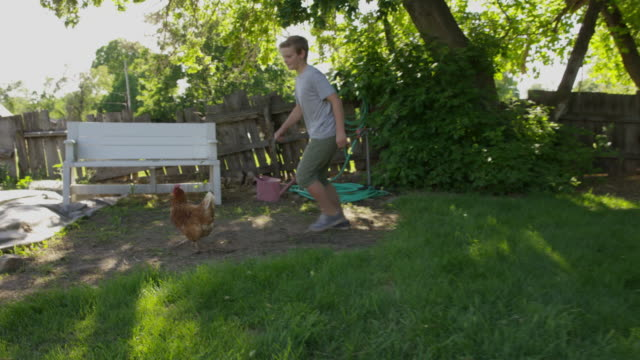 medium slow motion tracking shot of boy chasing chicken / springville, utah, united states - springville utah stock-videos und b-roll-filmmaterial