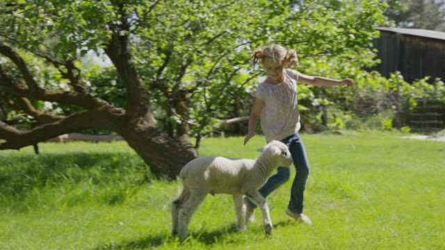 medium slow motion tracking shot of girl running in field with lamb / springville, utah, united states - springville utah stock-videos und b-roll-filmmaterial