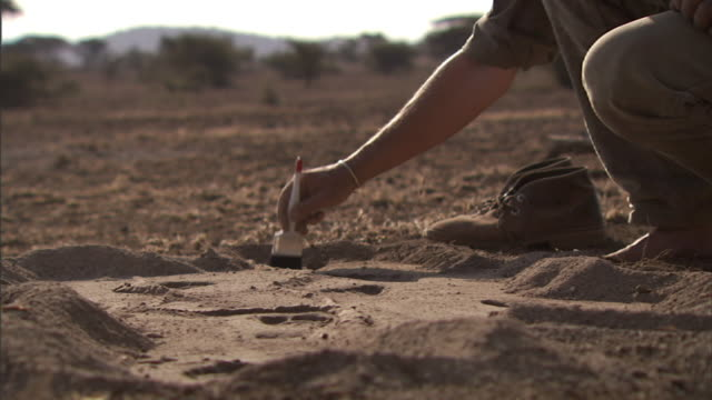 medium static - an archaeologist brushes away dirt from an excavation site. / tanzania - digging stock videos and b-roll footage