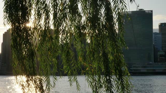 medium, sunset over manhattan seen through a weeping willow, usa - trauerweide stock-videos und b-roll-filmmaterial