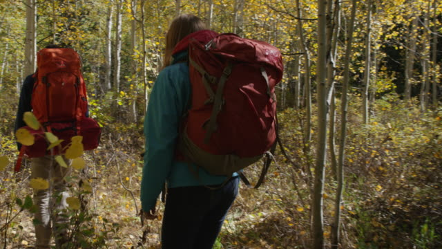 Medium tracking shot of couple hiking through dense forest / American Fork Canyon, Utah, United States