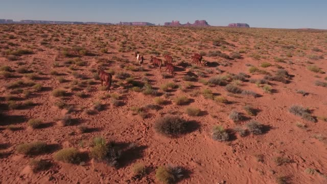 medium tracking slow wild horses, drone aerial 4k, monument valley, valley of the gods, desert, cowboy, desolate, mustang, range, utah, nevada, arizona, gallup, paint horse .mov - paint horse stock videos & royalty-free footage