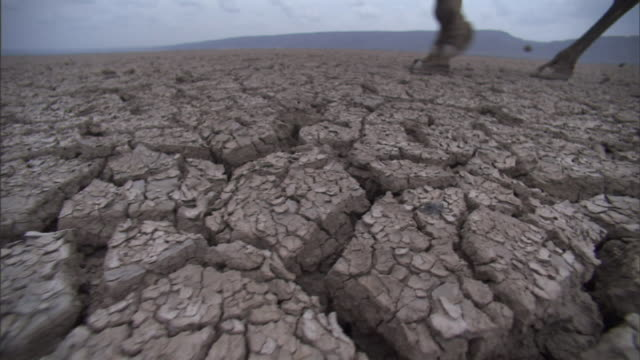 vídeos de stock e filmes b-roll de medium tracking-left - a caravan of camels and tribesmen cross dry, cracked earth in africa. / djibouti - seco