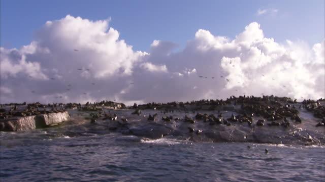 vídeos y material grabado en eventos de stock de medium tracking-right - cape fur seals rest on seal island. / south africa - foca peluda del cabo