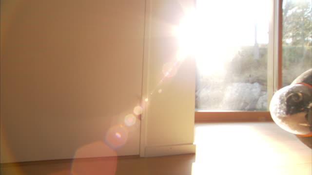 Medium tracking-right - Sunlight shines through a sliding glass door onto a spherical surveillance robot.