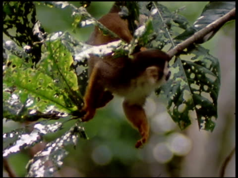 medium - foraging stock videos & royalty-free footage