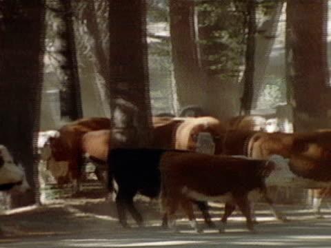 stockvideo's en b-roll-footage met medium - agrarisch beroep