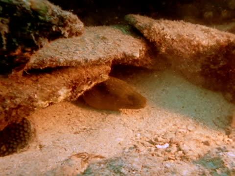 medium - moray eel stock videos and b-roll footage