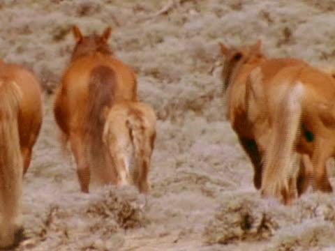medium - medium group of animals点の映像素材/bロール