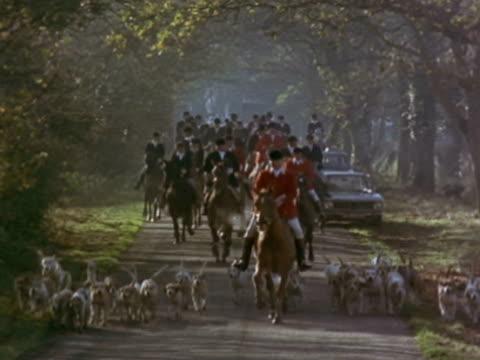 medium - foxhound stock videos & royalty-free footage