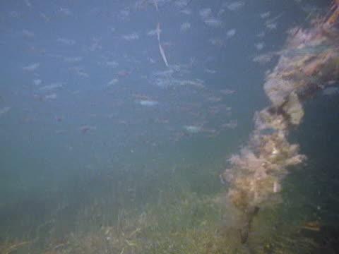 medium - school of fish stock videos & royalty-free footage