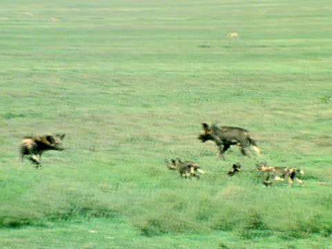 medium - animal behaviour stock videos & royalty-free footage