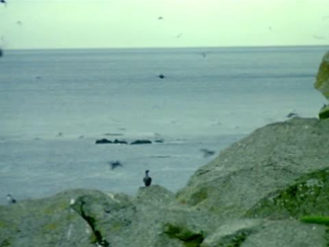 medium - pelagic zone stock videos & royalty-free footage
