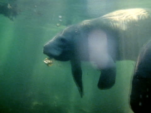 medium - aquatic mammal stock videos & royalty-free footage