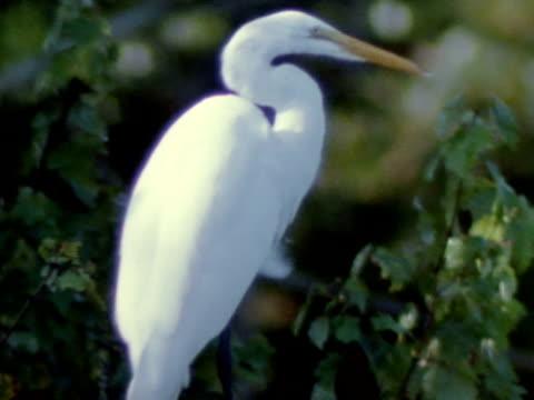 medium - egret stock videos & royalty-free footage
