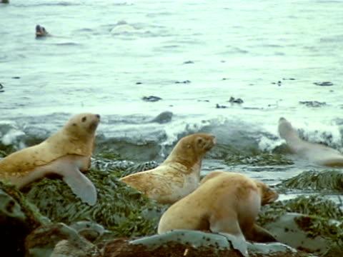 medium - kelp stock videos & royalty-free footage