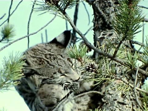 medium - pinaceae stock videos & royalty-free footage