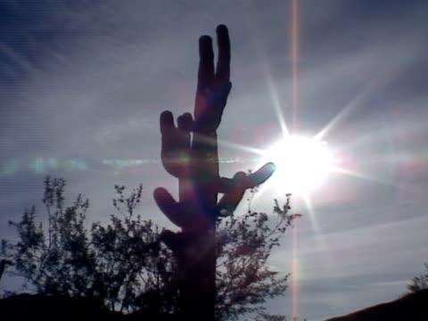 medium - saguaro cactus stock videos & royalty-free footage