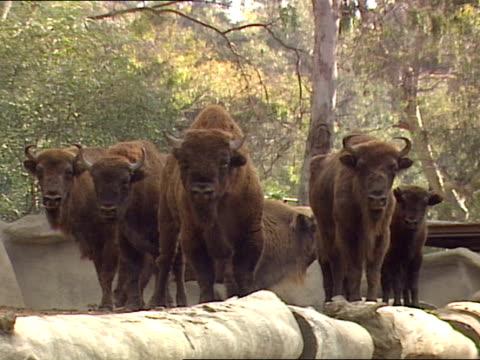 medium - medium group of animals stock-videos und b-roll-filmmaterial