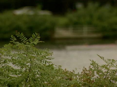 medium - チャールズ川点の映像素材/bロール