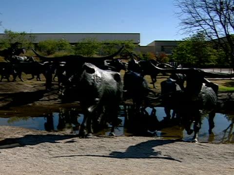 stockvideo's en b-roll-footage met medium - texas longhorn